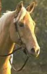 Horse-bridle-bit